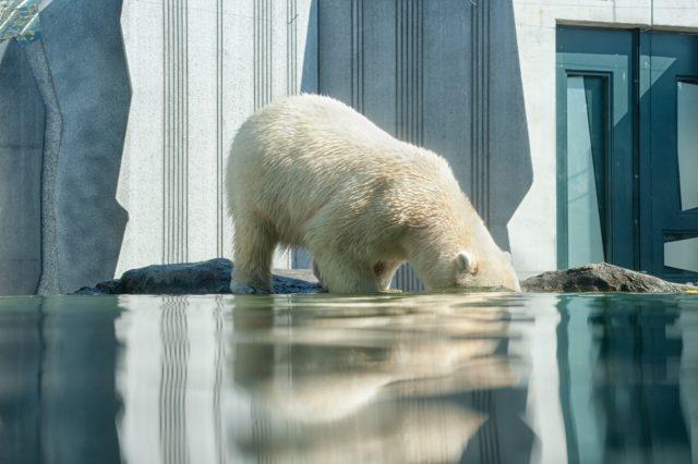 Le GIEC s'intéresse sérieusement aux océans et aux glaces à la surface du globe